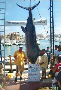 Large Blue Marlin Caught in Cabo San Lucas
