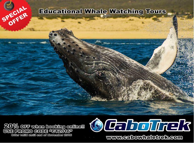 Special Offer Cabo Trek